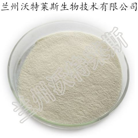 丝肽粉  高含量  现货供应 包邮 蚕丝提取物
