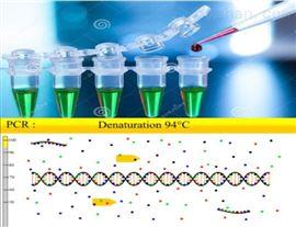 50次垂盆草PCR鉴定试剂盒多少钱